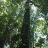 Tiskita Jungle Lodge