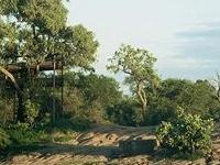 Umlani Bushcamp - Lodge