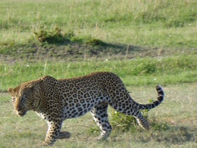 First Choice - Serengeti, Lake Natron, Ngorongoro, Tarangire Photos