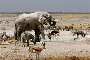 Etosha Safari Fotos