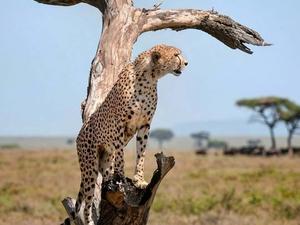 Big Cats Trip in Northern Tanzania Photos