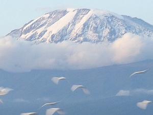 Trekking Mount Kilimanjaro - Umbwe Route Fotos
