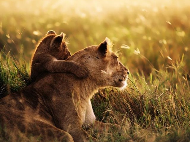 Serena Safari Package with Cultural Hike Photos