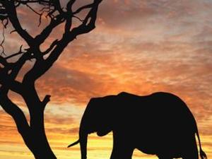 Sanbona Safari and Cape Town