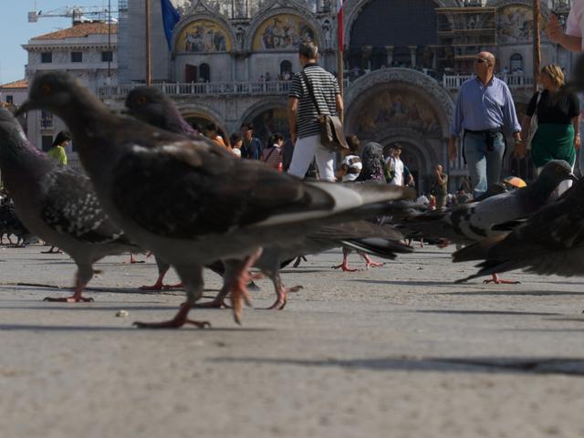 Photo Tour in Venice Photos