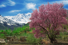 Blossom Tours In Pakistan