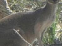 Kangaroos On Tour