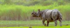Kaziranga National Park3