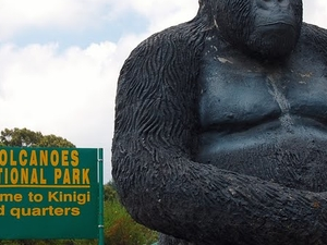 Gorilla Trekking Experience Photos