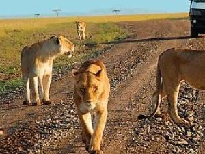 Family Tour in Kenya Fotos