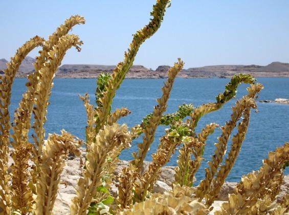 Fishing Trip in Aswan Lake Photos