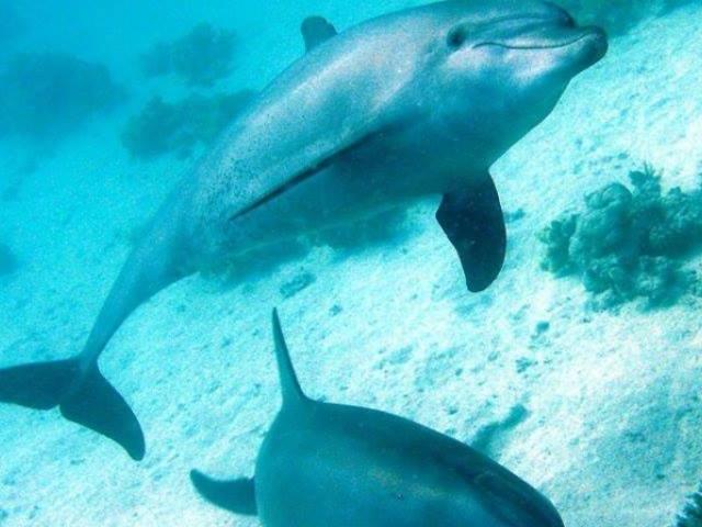 Dolphin House Trip Photos