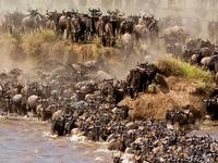 3 Day Serengeti Wildebeest Migration