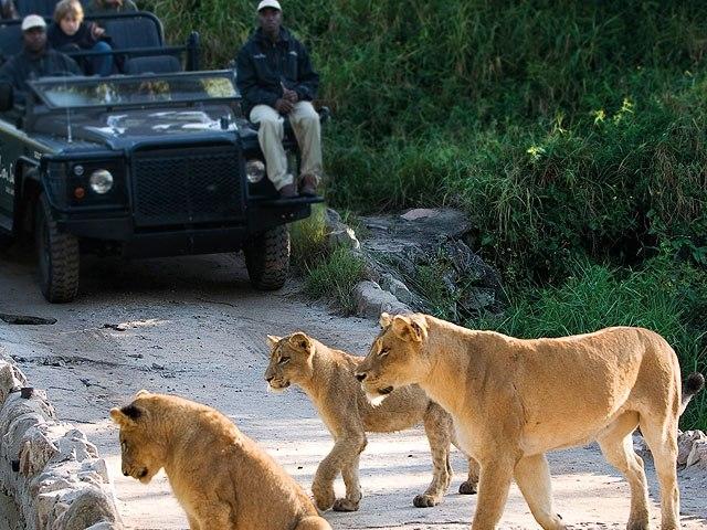 Kruger Park Traditional Bungalow Safari Photos