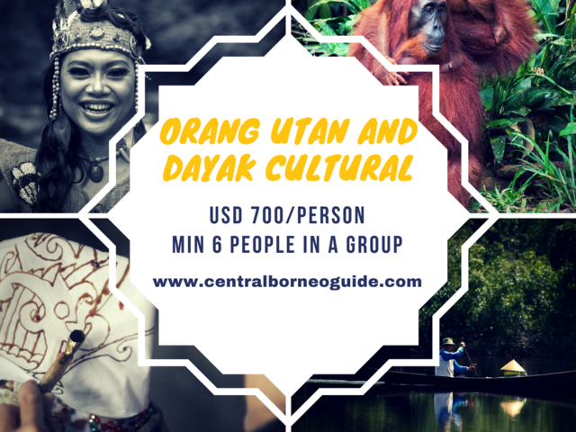 Orang Utan and Dayak Cultural Tour Photos