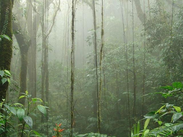 Costa Rica Adventure - Small Group Exclusive Photos