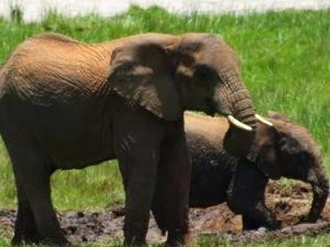 Safari Adventure Fotos