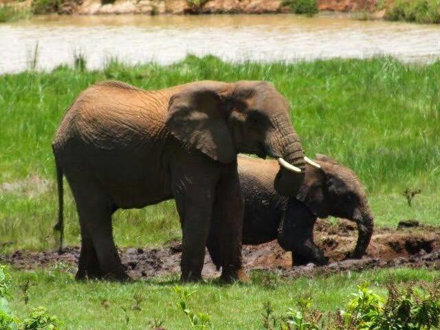 Safari Adventure Photos