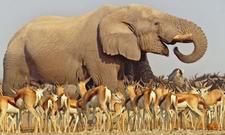 Africa Holiday Tours Wildlife