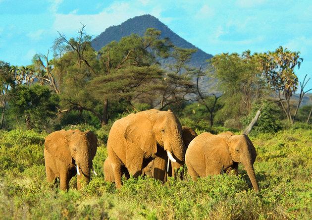 Kenya Wildlife Trip Masai Mara, Lake Nakuru, Samburu Photos