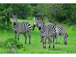 A 9 Days Wildlife Holiday in Uganda Fotos