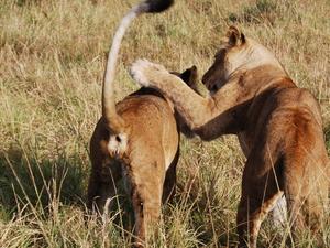 Masai Mara Expedition Photos