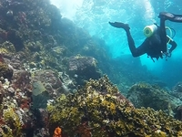 Carriacou Two Tank Dive Package