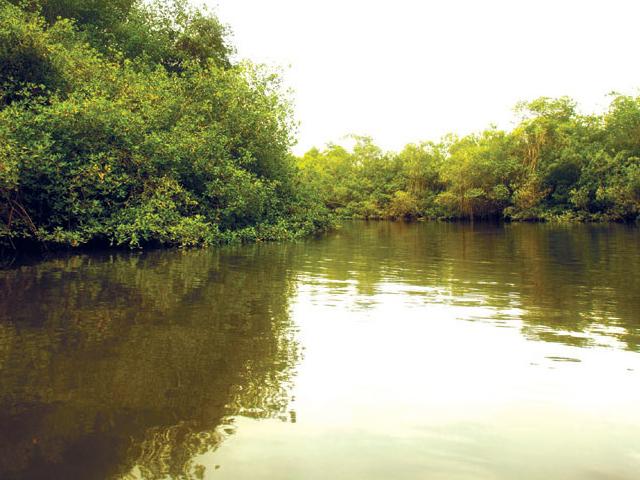Churute's Mangrove Tour with Cocoa Farm Photos