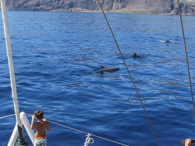 Dolphin and Whale Watching - Madeira Island - Funchal Photos