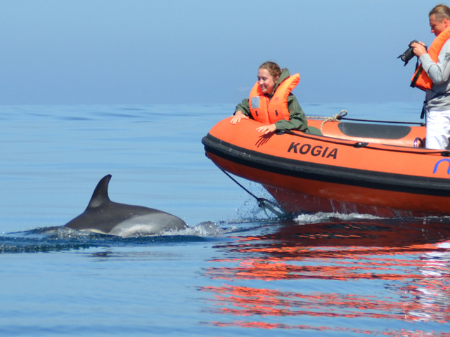 Dolphin Watching Boat Trip Photos