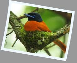 Uganda Birding Safari Fotos