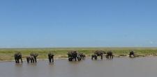 Bush Beach Safari
