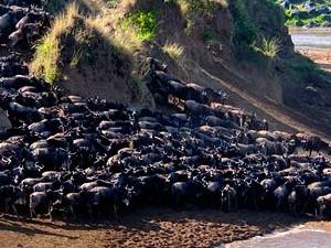 Kenya Migration Safaris Fotos