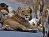 Kruger Park Wildlife Safari