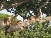 Highlights of the Unique Experiences in East Africa