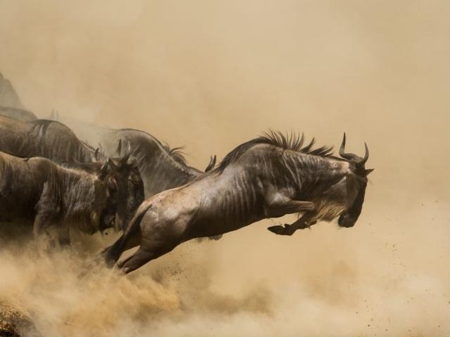 The Big Migration Safari Photos
