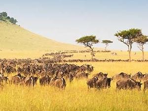 Tanzania Wildlife Safaris Photos