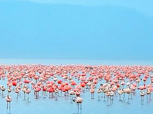 Trip to Lake Nakuru Photos