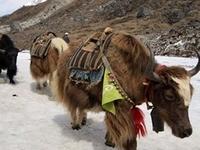 Rob Everest Photos 007