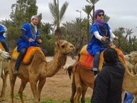 Marrakech Half Day Camel Ride in Palm Grove