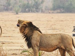 Best of Zambia Safari - Lower Zambezi & South Luangwa Fotos