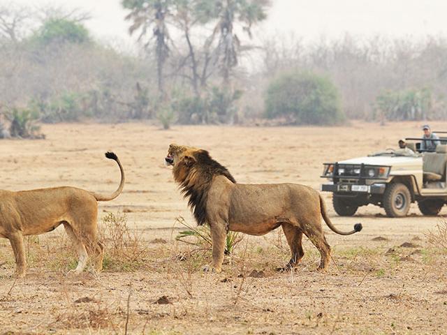 Best of Zambia Safari - Lower Zambezi & South Luangwa Photos