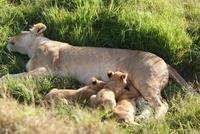 Kenya Camping Tours