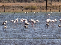 Botswana Travel
