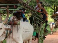 Home Stay Private Tour - Sri Lanka