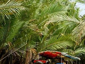 Mekong Delta Tour - My Tho Ben Tre Photos