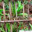 Ceylon Island Travel Kandy Day Tour Spice Herb Garden