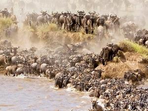Trip to Maasai Mara Photos