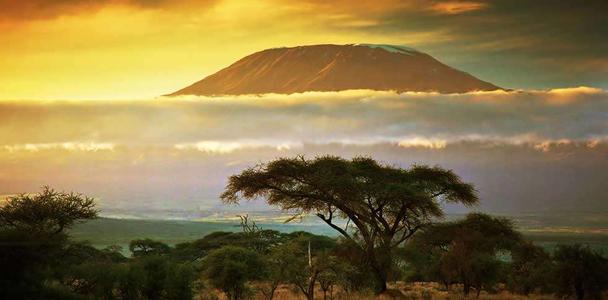 Safari in Tanzania Photos