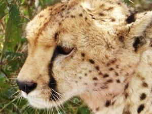 A Safari for Two Photos